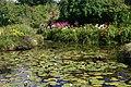 Ardwell Gardens pond - geograph.org.uk - 1093947.jpg