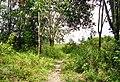Areal perladangan di Petapahan (33).JPG