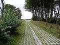 Auchencrosh Trail - geograph.org.uk - 709921.jpg