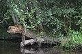Auray (River)LeLochAmont de la Rivière d'AurayAout2018MorbihanLamiotMFL b 03.jpg