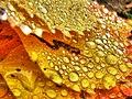 Autumn Leaves ~ Ontario (259298201).jpg