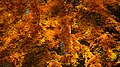Autumn in Burcina-4.jpg