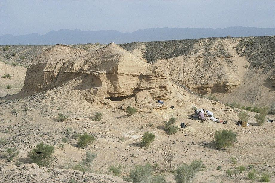 Avimimus excavation