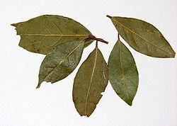 Лаврове листя