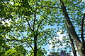 Bäume in der Natur.JPG