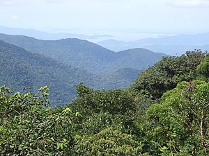 Atlantic Forest - Atlantic Forest in Serra do Mar.
