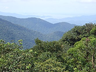 Atlantic Forest - Area of the Atlantic Forest in Serra do Mar