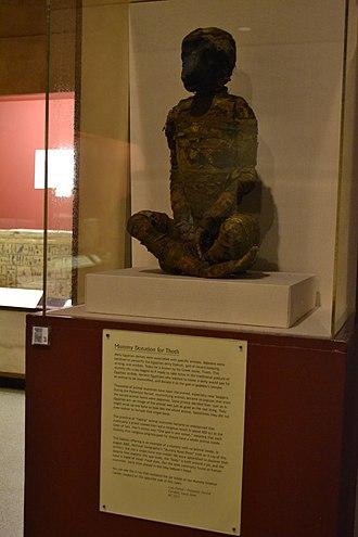 Rosicrucian Egyptian Museum - Image: Baboon mummy at Rosicrucian Egyptian Museum