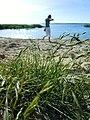 Badestrand Usedom - panoramio.jpg