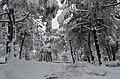 Bafra da kar - panoramio (10).jpg