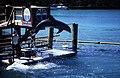 Bahamas 1988 (290) Paradise Island Paradise Lake (23785207199).jpg