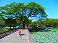 Bahan, Yangon, Myanmar (Burma) - panoramio (13).jpg