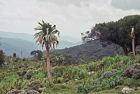 Bale mountains.jpg
