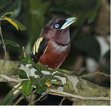 In Kaeng Krachan National Park Thailand