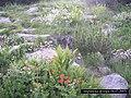 Bansko, Bulgaria - panoramio (2).jpg