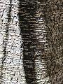 Bark (8044374281).jpg