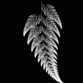 Barnsleys fern.png