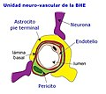 BarrHematEncef estructura Unidad neurovasc.jpeg