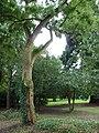 Baum im Farwickpark - panoramio.jpg