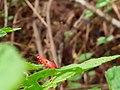 Beetle on plant.jpg