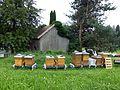 Berggasthof Haldenhof - Bienenstöcke (2).jpg