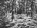 Beschadigd, Bestanddeelnr 194-1232.jpg
