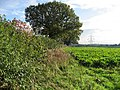 Beside The Sugar Beet - geograph.org.uk - 266531.jpg