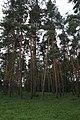 Bila Tserkva, Kyivs'ka oblast, Ukraine - panoramio (17).jpg