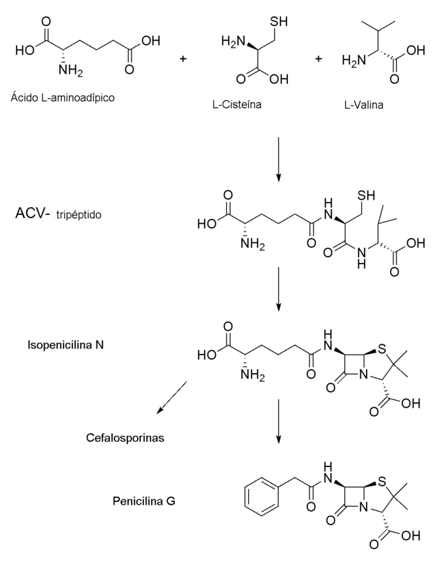 penicilina vk 500 mg para que sirve