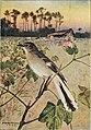 Bird-lore (1909) (14746526691).jpg