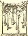 Bird lore (1906) (14771154393).jpg