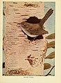 Birds of lakeside and prairie (6257519544).jpg