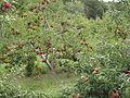 Bishop's Ochards 4.jpg