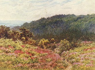 Blackdown, West Sussex - View of Blackdown, painted by Helen Allingham, 1902