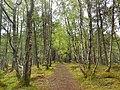 Blackmuir Wood - panoramio.jpg