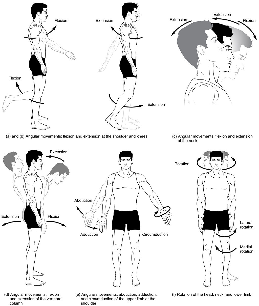 Body Movements I