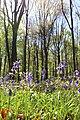 Bois de la Louvière - Livierenbos, Flobecq - Vloesberg 01.jpg