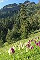 Borjomi NP, Panorama trail.jpg
