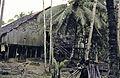Borneo1981-020.jpg