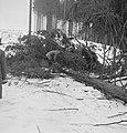 Bosbewerking, arbeiders, boomstammen, Bestanddeelnr 251-7095.jpg
