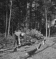 Bosbewerking, arbeiders, boomstammen, Bestanddeelnr 253-5938.jpg