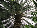 Botanic garden - Cluj-Napoca (2288201091).jpg