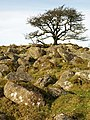 Boulders and tree by West Glaze Brook - geograph.org.uk - 1088346.jpg