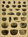 Brachiopod genera of the suborders Orthoidea and Pentameroidea (1932) (19786536193).jpg