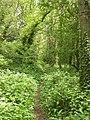 Bransgore, copse - geograph.org.uk - 1296713.jpg