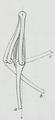 Braus 1921 44.png