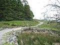 Bridge over Afon Bryn-llin-fawr carrying forestry road - geograph.org.uk - 474967.jpg