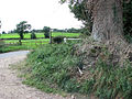 Bridleway meets Dove Lane - geograph.org.uk - 1451447.jpg