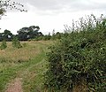 Bridleway to the River Trent - geograph.org.uk - 46928.jpg