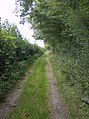 Bridleway towards Howberrywood - geograph.org.uk - 595712.jpg